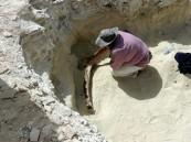 """""""المساحة الجيولوجية"""" تكتشف عينات جديدة لفيل صغير في صحراء النفود"""
