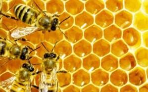 «رئيس جمعية نحَّالي مكة» يُحذِّر من هذا العسل المغشوش