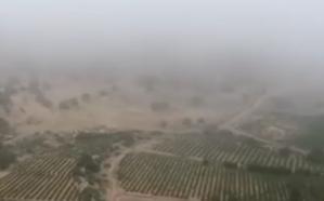فيديو: شجرة البيشم النادرة اكتشفها أهالي الطائف.. وتعالج هذه الأمراض!